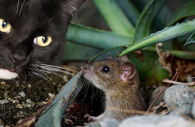 Las mejores trampas para ratones para exteriores: Guía y reseñas