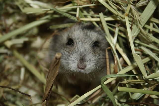 Trampa para ratones con cubo - reseñas y consejos